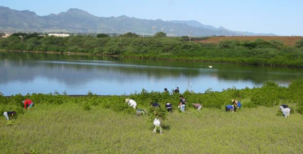 Volunteers clear mangrove growth at the Waiawa Wetlands