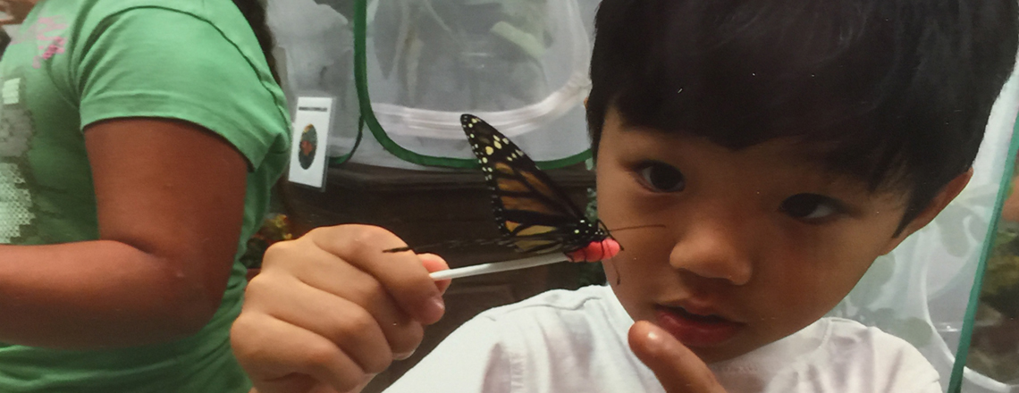 Young boy touching a butterfly