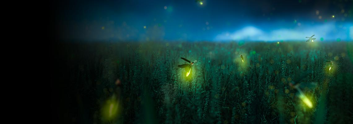 nighttime field of grass with fireflies