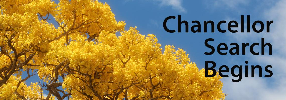 yellow trees Chancellor Search begins