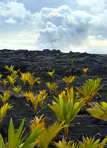 photo of smoking volcano with plants growing out of lava rocks