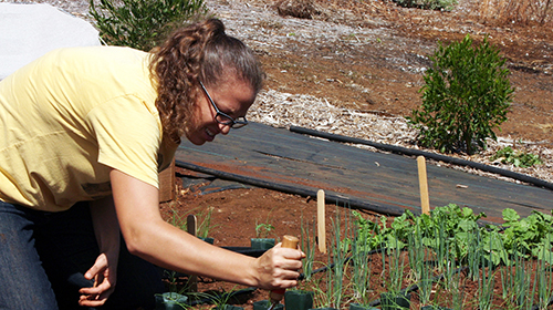 student planting seedling in lower campus garden